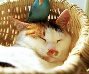 cat, parrot, and sleep image
