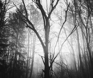 dark, forest, and empty image