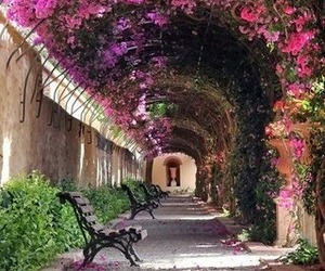 flowers, pink, and spain image