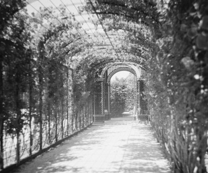 black and white, flowers, and hall image