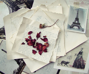 paris, rose, and vintage image