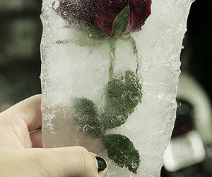 rose, ice, and flowers image