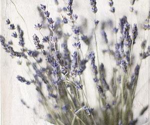 bouquet, lavanda, and lavender image