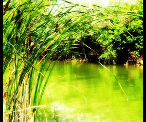 green, summer, and nature image