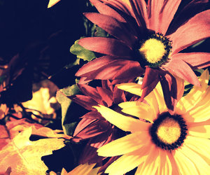 black, fall, and flower image