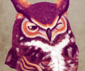 animals, owl, and photography image