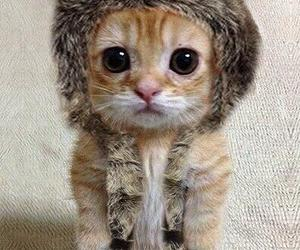 animal, kitty, and cute image
