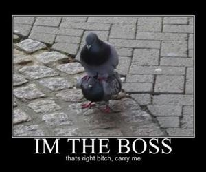 funny, birds, and boss image
