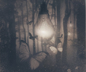 butterfly, light, and photography image
