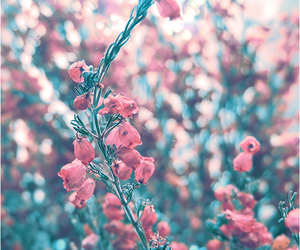 flowers, pink, and cute image