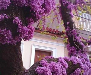 flowers, tree, and purple image