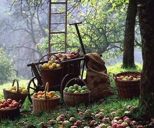 apple, autumn, and fall image