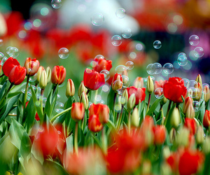 flowers, tulips, and bubbles image