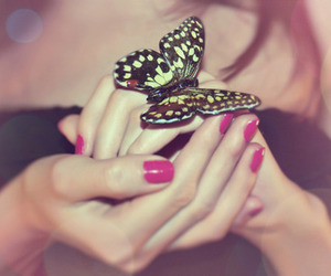 pink, butterfly, and nails image