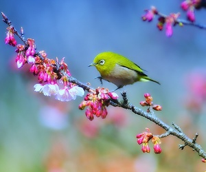 bird and nature image