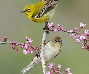 birds, photography, and nature image