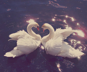 couple, heart, and Swan image