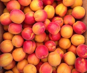 apricots, nature, and peach image