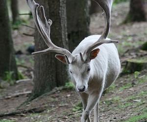 animal, nature, and white image