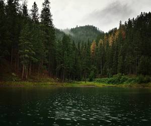 tree, water, and forest image