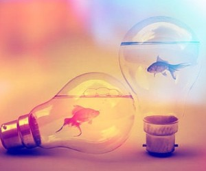 light, fish, and cool image