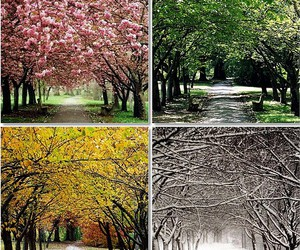 spring, summer, and winter image