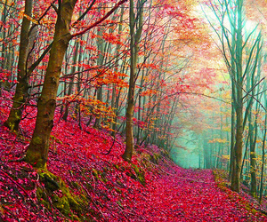forest, leaves, and pink image