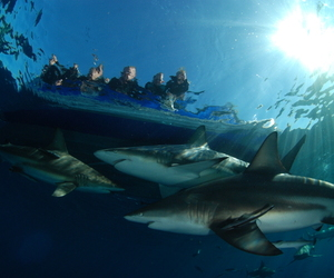 human, shark, and south africa image
