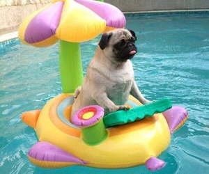 dog, pool, and summer image