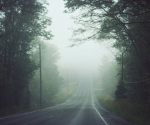 road, fog, and trees image