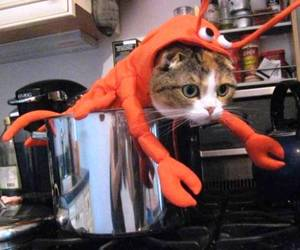 cat, funny, and lobster image