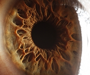 beautiful, beauty, and eye image