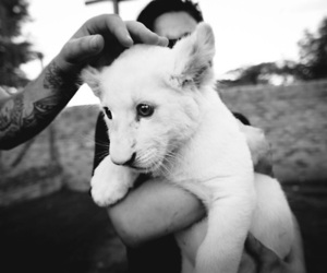 lion, cute, and black and white image
