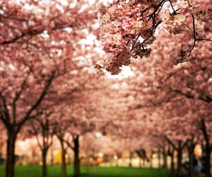 beautiful, pretty, and blossom image