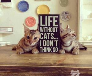 cat, cute, and life image