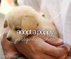 puppy, cute, and adopt image