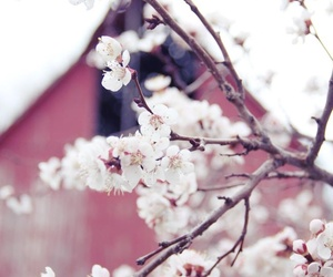 beautiful, flowers, and photography image