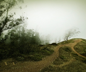 fog, hill, and path image