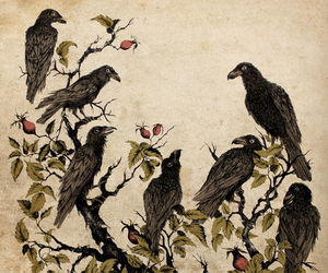 birds, black, and brothers grimm image