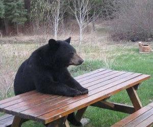 bear, animal, and funny image