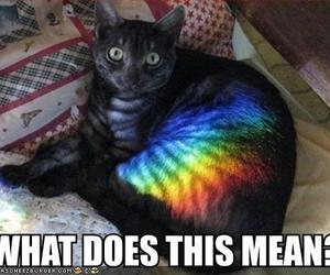 prism, lolcat, and cheezburger image