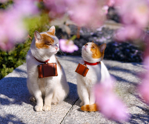 cat, japan, and cute image