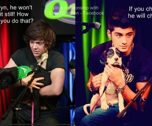 dog, boy, and 1d image