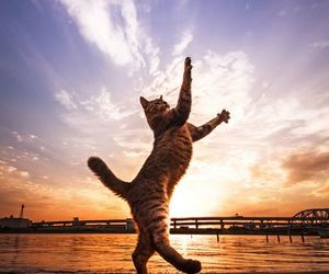 cat and jump image