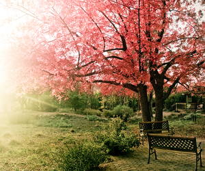 pink, sunshine, and tree image