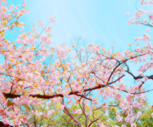 flowers, pink, and icon image