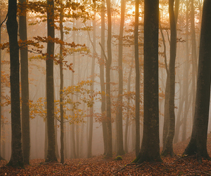autumn, forest, and woods image