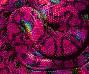 pink, snake, and photography image