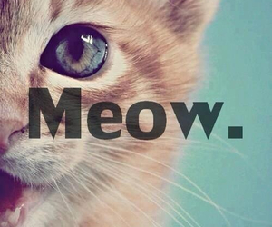 cat, meow, and cute image
