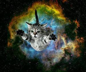 cat, galaxy, and space image